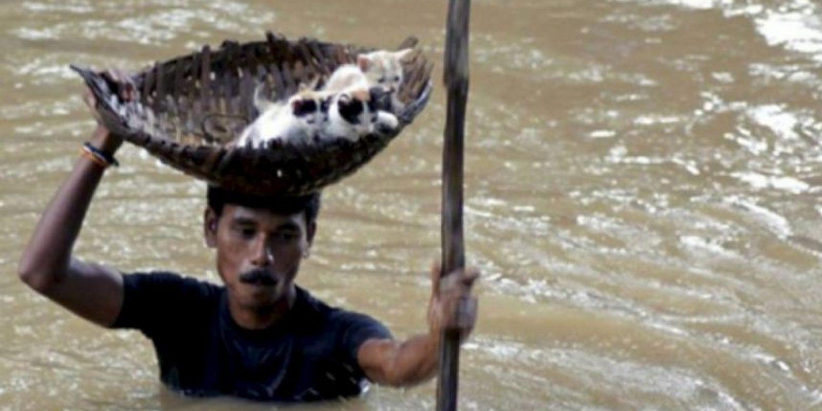 Este hombre rescató a tres gatitos Foto:AFP