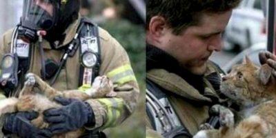 Este bombero rescató a un gatito Foto:AFP