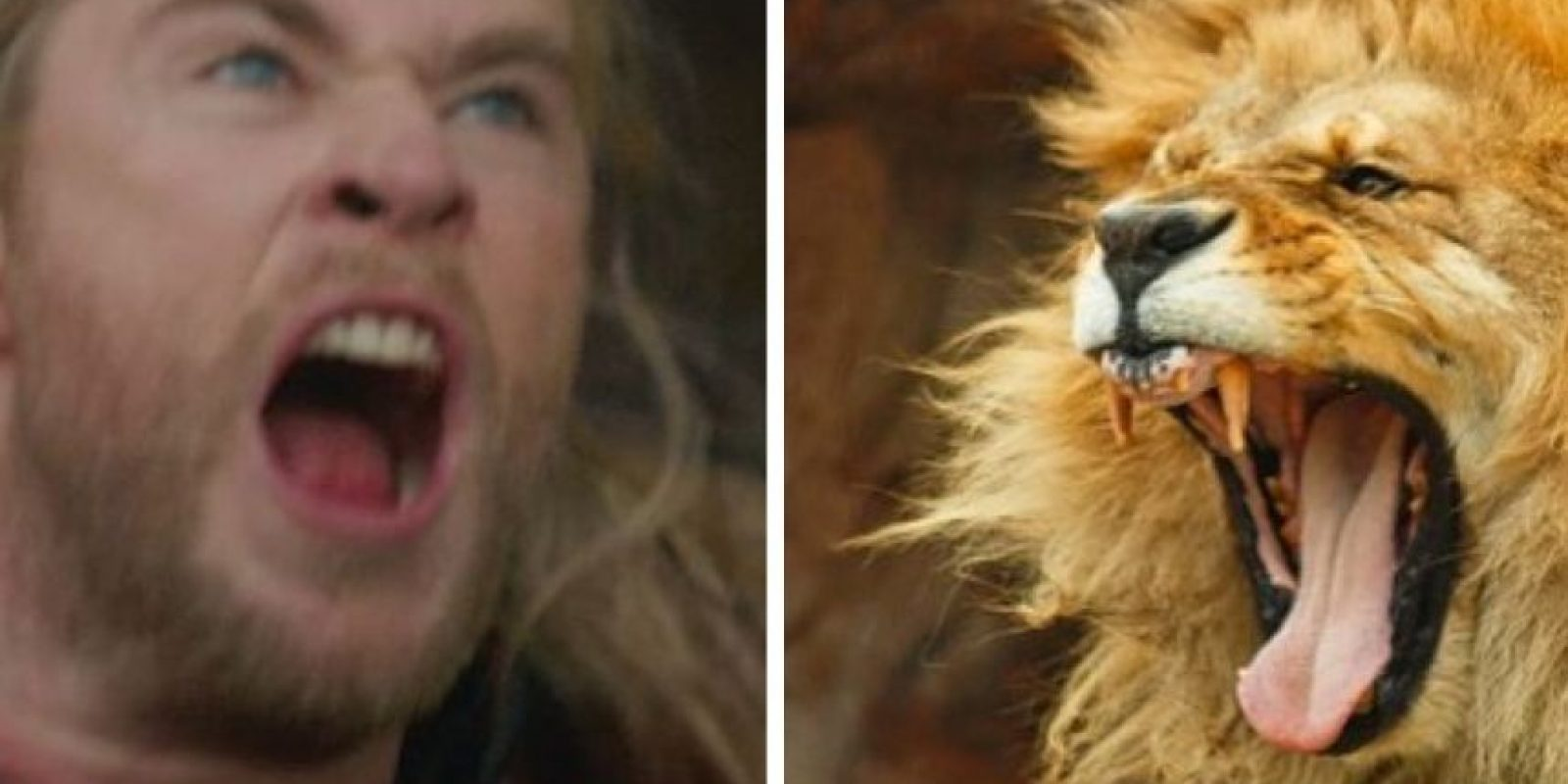 Chris Hemsworth y el Rey León… Foto:Twitter
