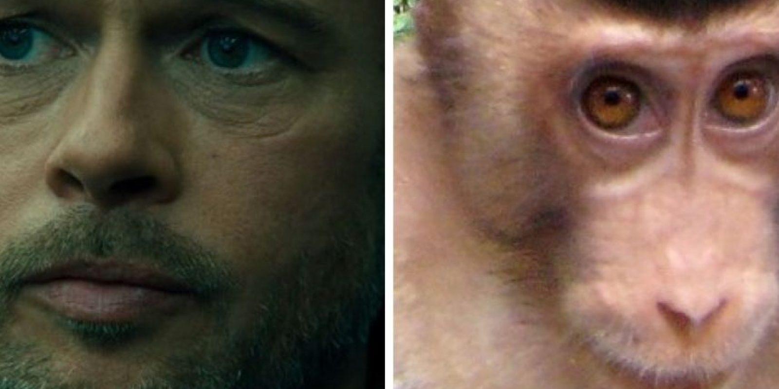 ¿Brad Pitt y este mono? Foto:Twitter