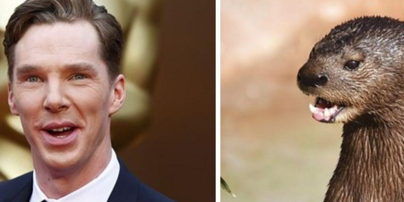 Benedict Cumberbatch y esta nutria. Foto:Twitter