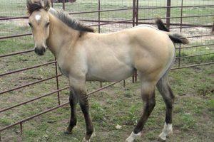 """""""LP"""" se dedica a la venta de caballos y ganado. Foto:lpangusranch.com"""