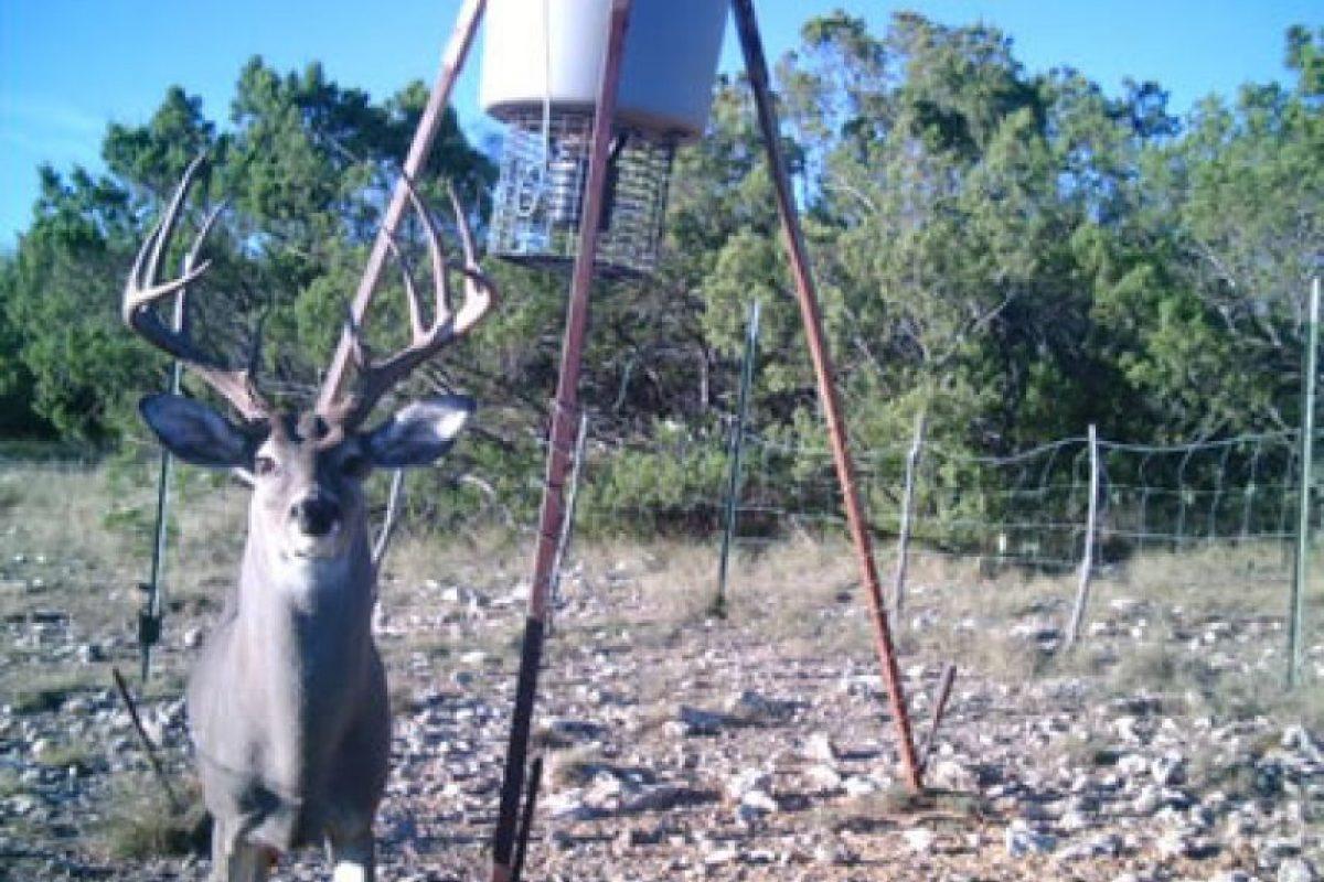 Este rancho comenzó sus operaciones en 2002. Foto:lpangusranch.com