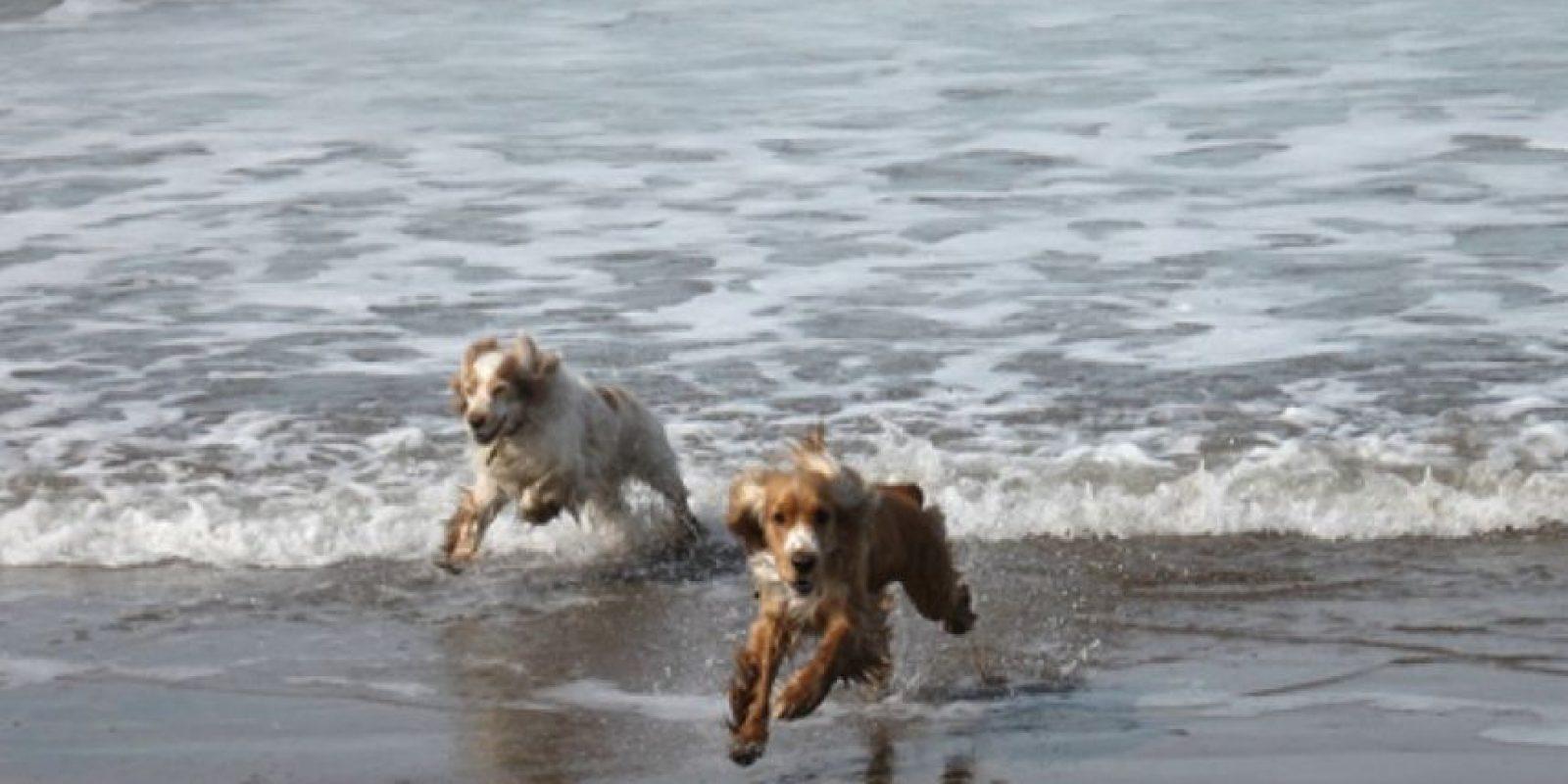 Y, por supuesto, sacar al perro a pasear cada día también puede ayudar a vivir una vida más larga y saludable. Foto:Tumblr.com/Tagged-perros
