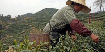 7. Granjas donde se cultivan cadáveres Foto:Wikipedia