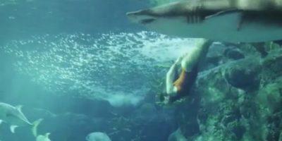 VIDEO: Rihanna nadó y se retrató con un tiburón