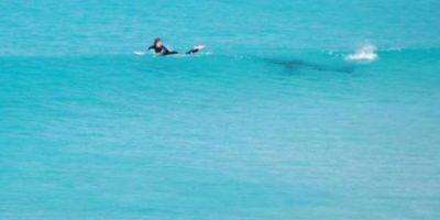 Tiburones frente a surfistas Foto:Twitter