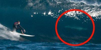 Más tiburones Foto:Imgur