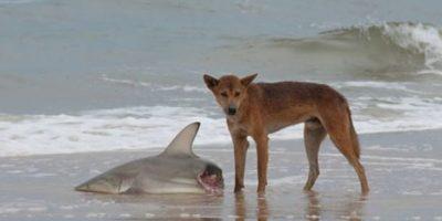 Esto en la playa Foto:Imgur