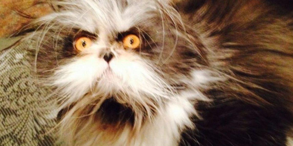 Atchoum: El gato más