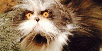 """Atchoum: El gato más """"tenebroso"""" de Internet"""