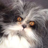 Su mirada es tan penetrante que llega a intimidar Foto:Vía Instagram: @atchoumfan