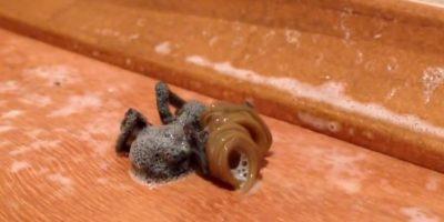 Se ve a una araña siendo absorbida por un gusano que sale desde su interior. Foto:Youtube