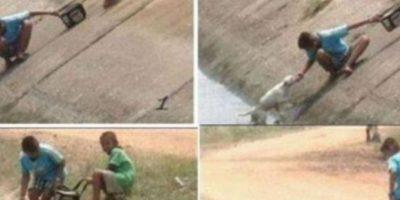 Dos personas salvan a un perrito del caño Foto:Tumblr
