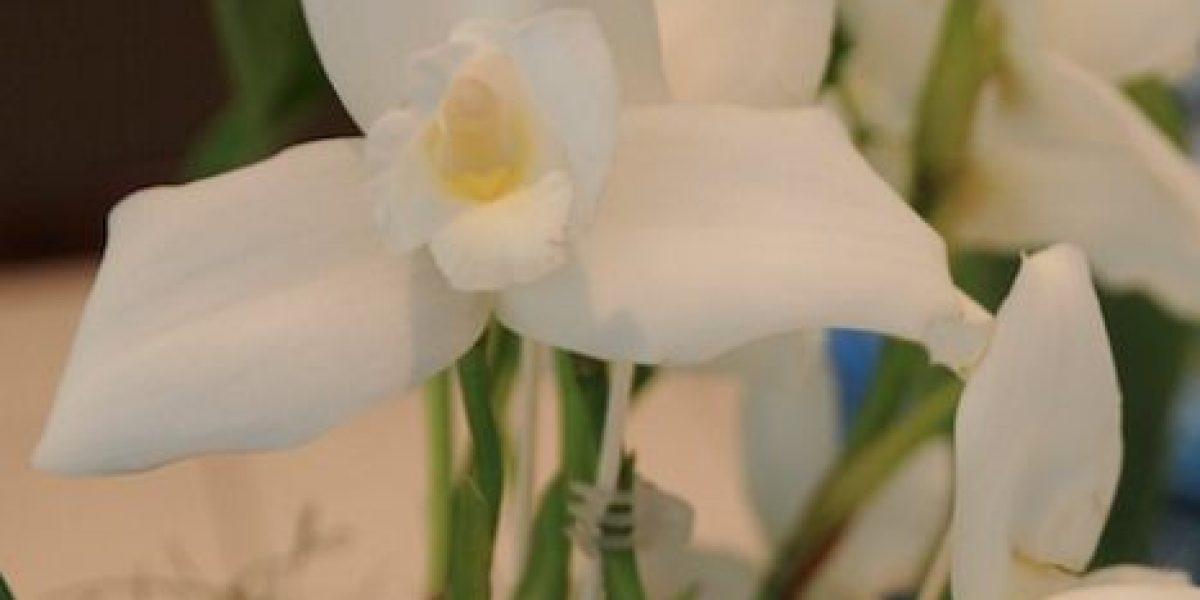 FOTOS. ¿Sabías que hay más de 1,500 especies de orquideas? Visita la expo