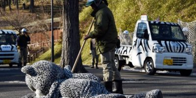 FOTOS: ¿Por qué un guardia asusta a este singular leopardo?