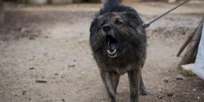 ¡Increíble! Tribunal prohíbe a perro ladrar en la noche