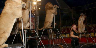VIDEO: ¡Qué miedo! León atacó a su domadora en pleno show de circo