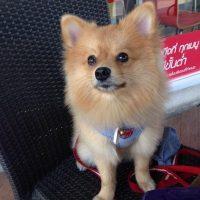 Foto:Instagram autodogpom