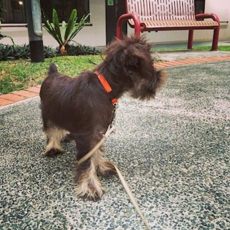 Foto:Instagram snugglesdog