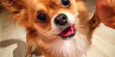 Mascota escapa de su casa para visitar a su dueña en el hospital