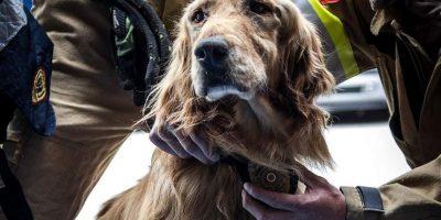 FOTOS. Emotiva despedida al bombero Jacobo, el héroe canino de Bogotá