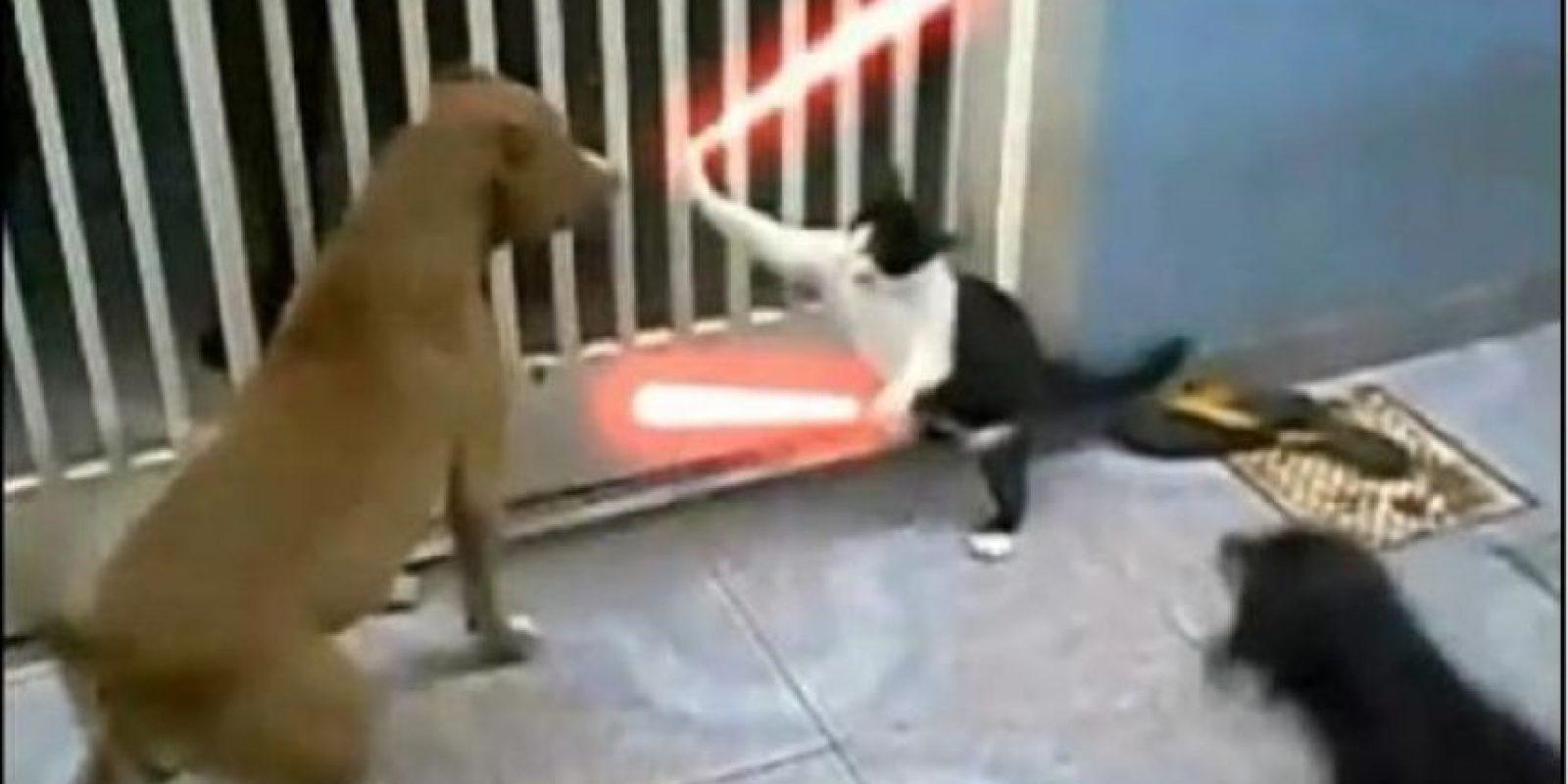 Foto:Tumblr.com/Tagged-gatos-vs-perros