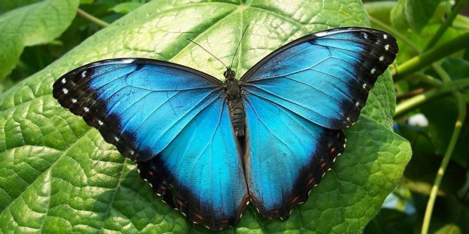 Mariposa Misión Azul Foto:Agencias