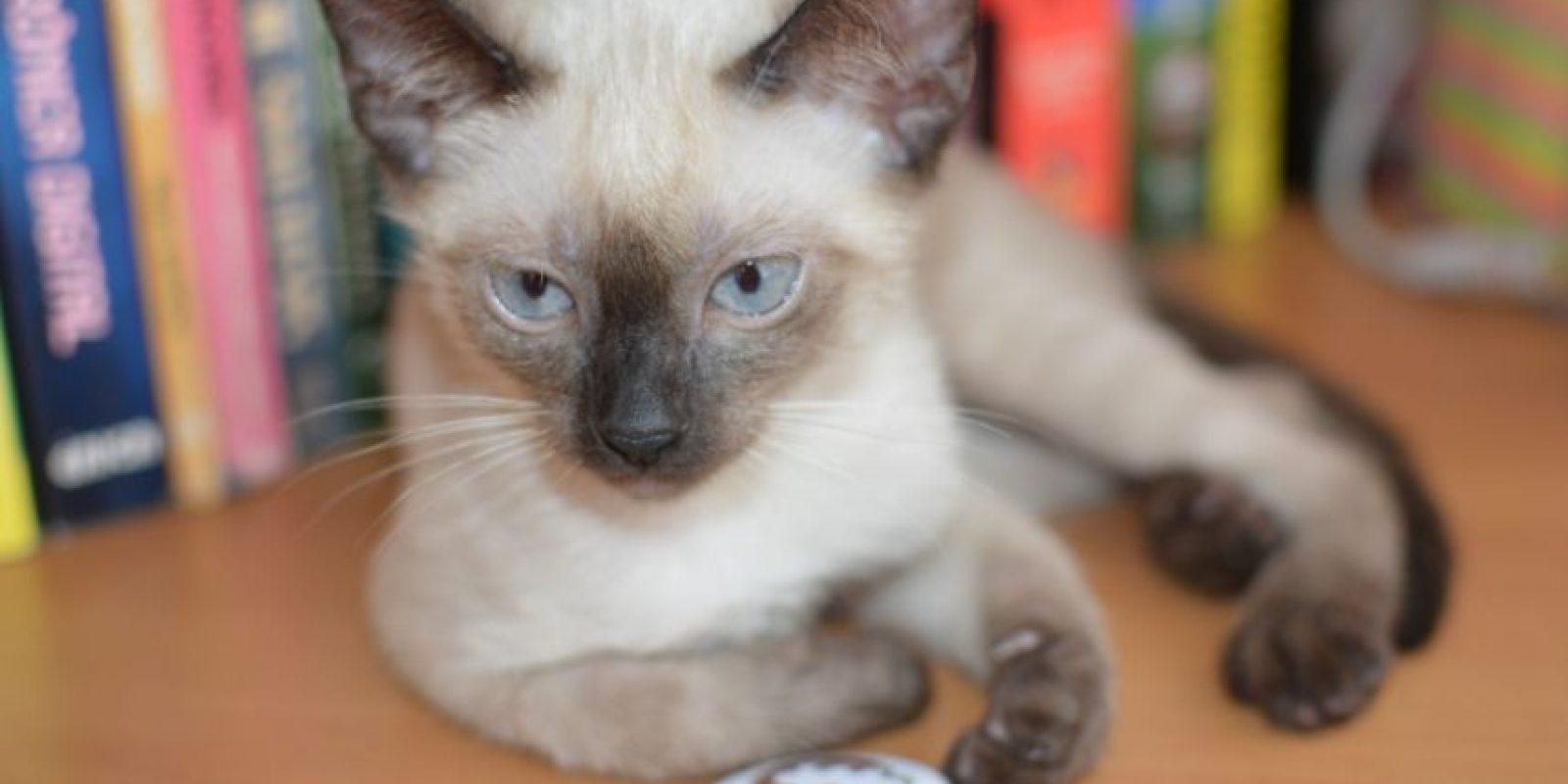 Foto:Tumblr.com/tagged-gato