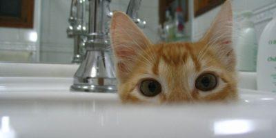 """¿Están muy estresados? La """"gatoterapia"""" podría ser la solución"""