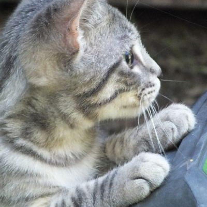La terapia de gatos también se ha utiliado par ayudar a la recuperación y bienestar de las víctimas de accidentes cerebrovasculares. Foto:Pixabay