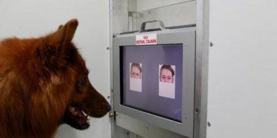 Estudio afirma que perros pueden distinguir los gestos humanos