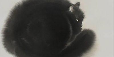 Fotos: Gatos peludos creados con acuarela