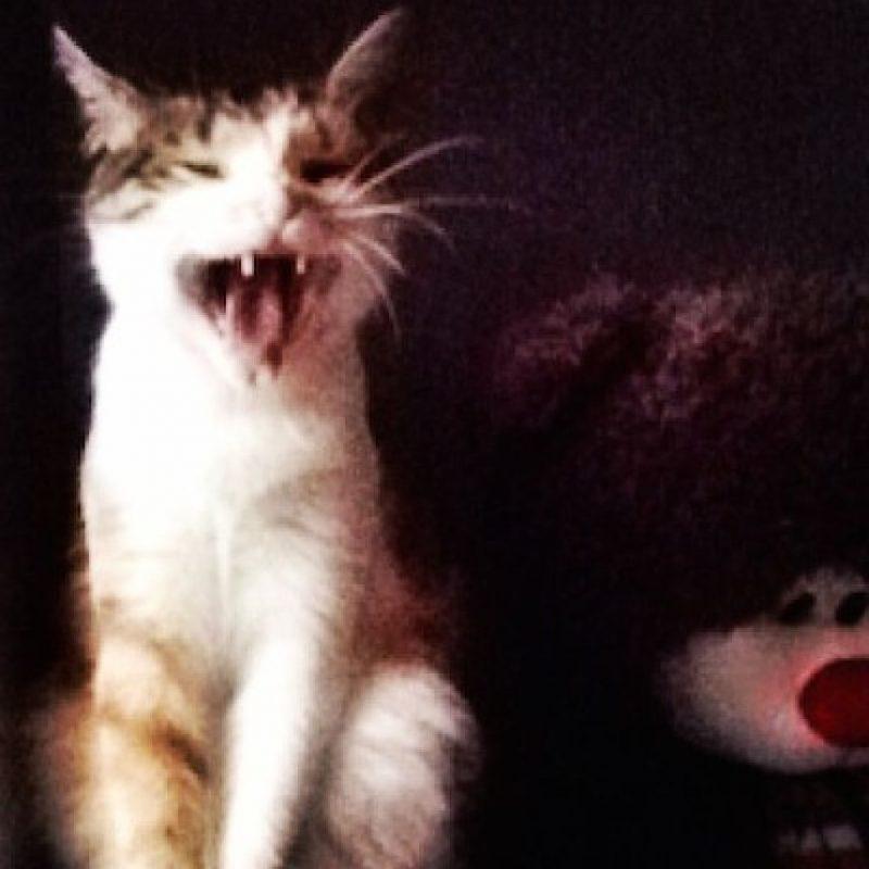 2. Alimentarlo adecuadamente: requieren la opinión de un veterinario para conocer qué comida debe ingerir Foto:Instagram audreeeeey