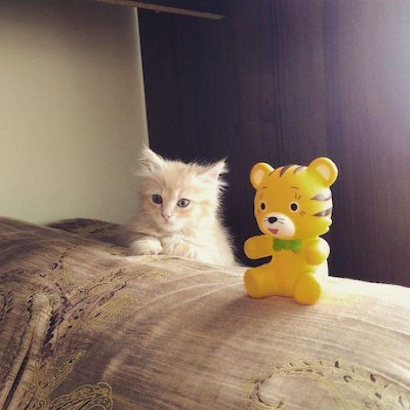 3. El gato debe tener una caja en la cual realizar sus necesidades Foto:Instagram angelina.korneeva