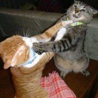6. A los gatos les gusta trepar, de preferencia hay que tener un espacio designado para ello Foto:Instagram adelfaisal