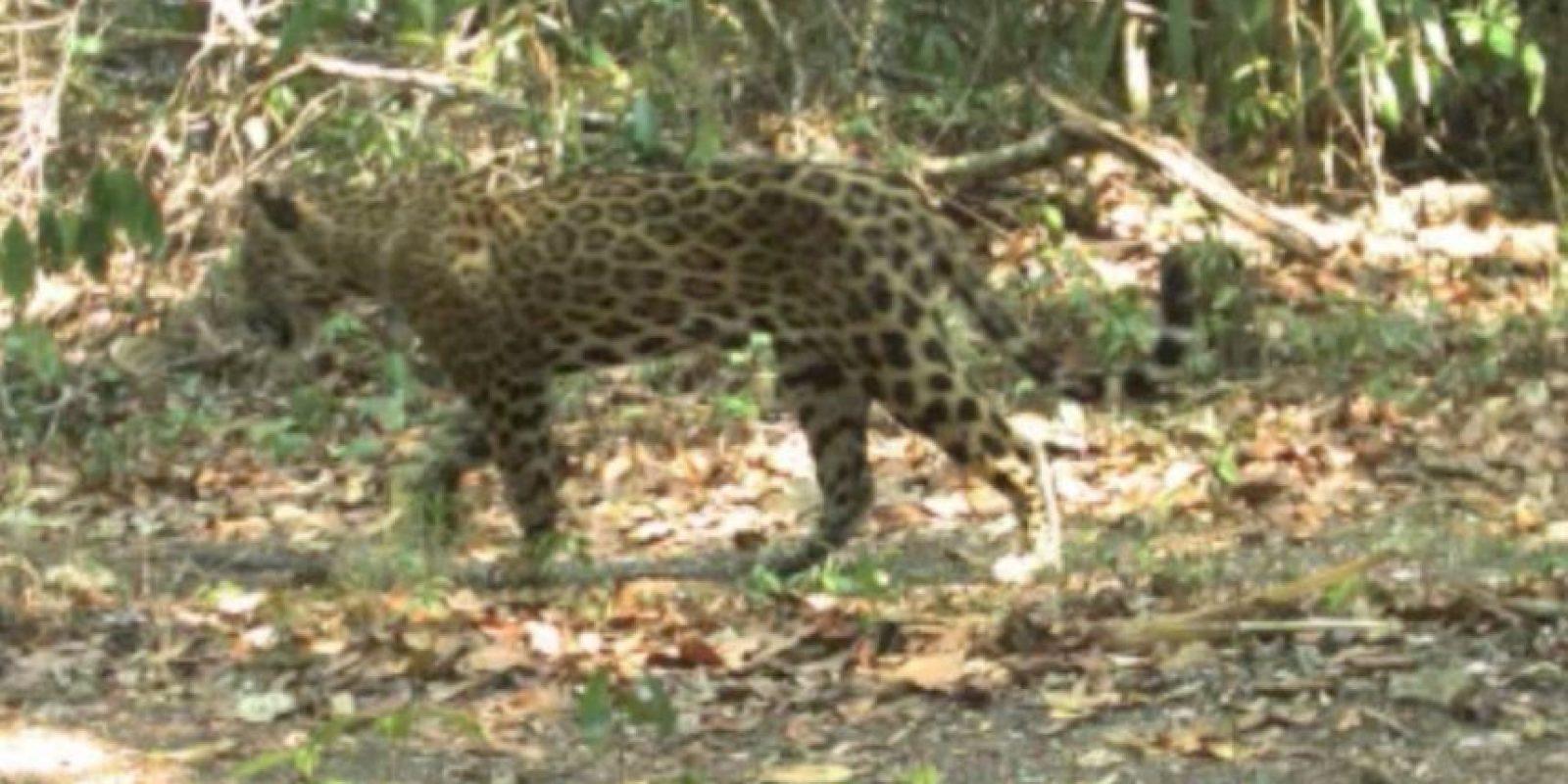 Foto:Tomada del video de Conap