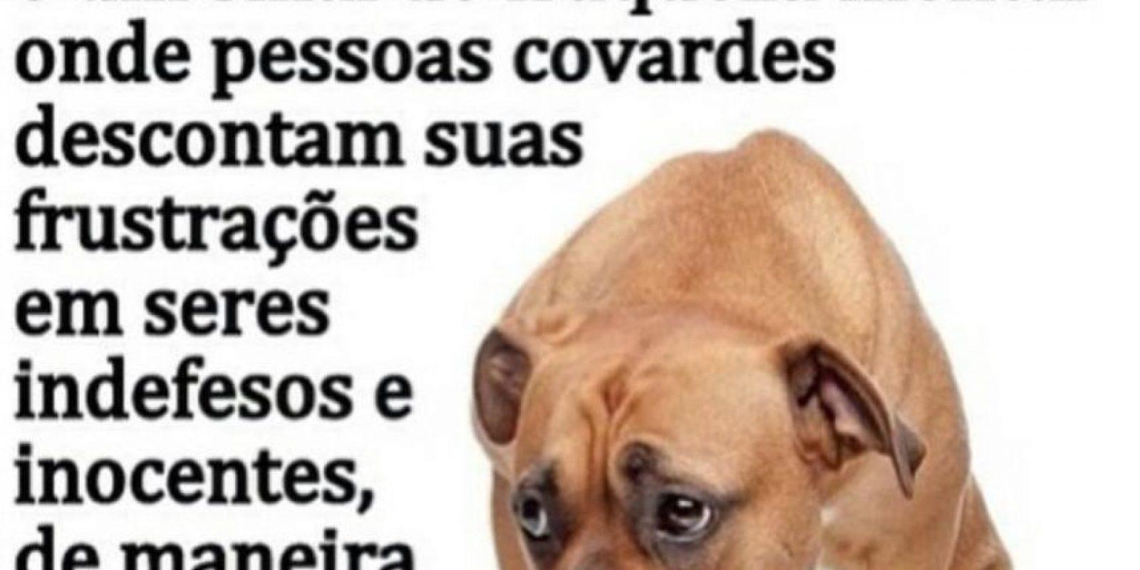 Por esta razón los animalistas acudirán a nuevas instancias legales. Foto:Facebook