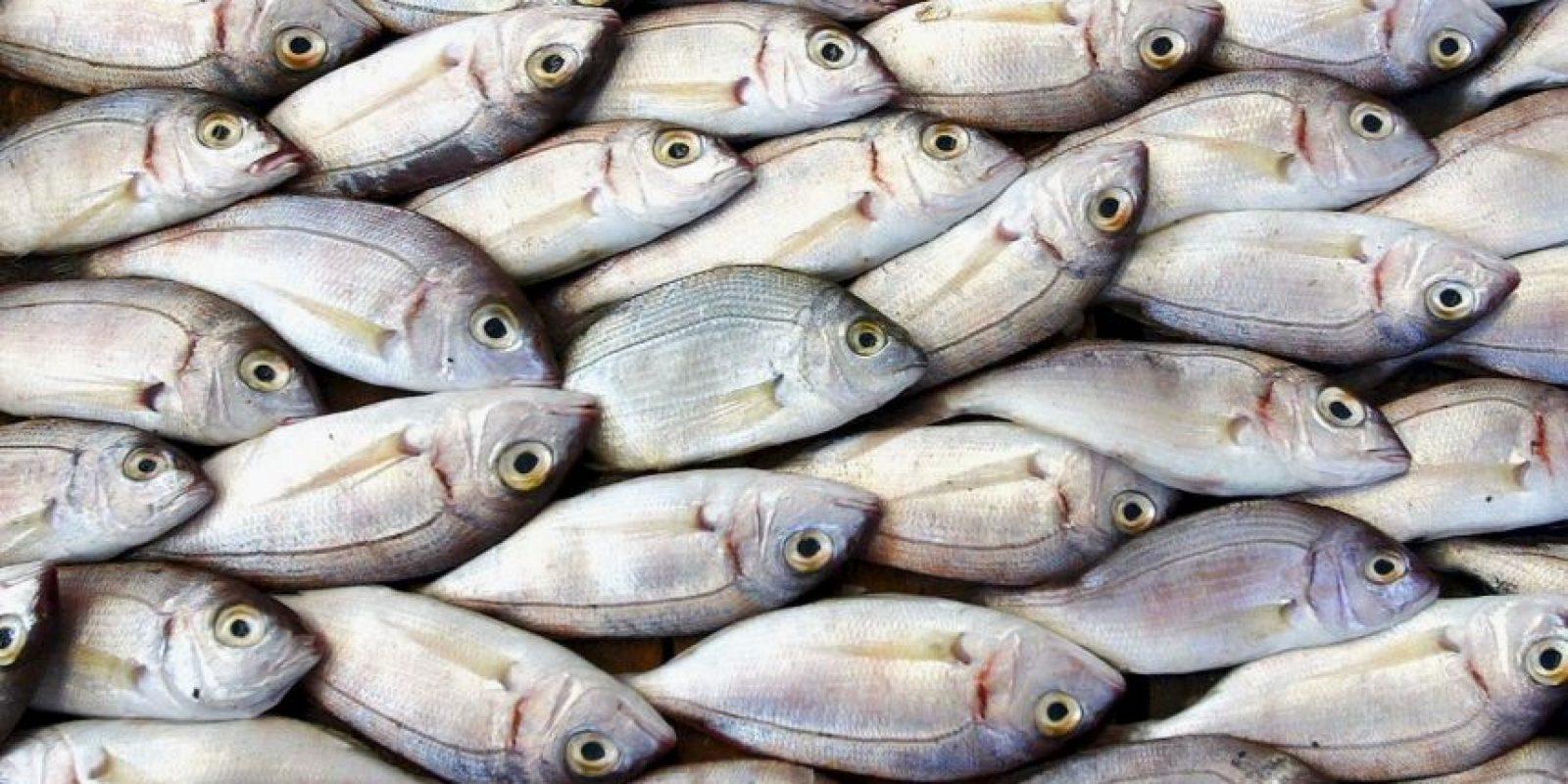 1. El pez tiene las dos bocas unidas. Foto:Getty