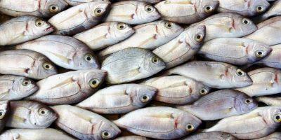 FOTO: Encuentran pez con dos bocas en Australia