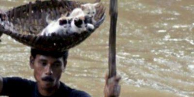 Indio rescata a gatitos de inundación. Foto:AFP