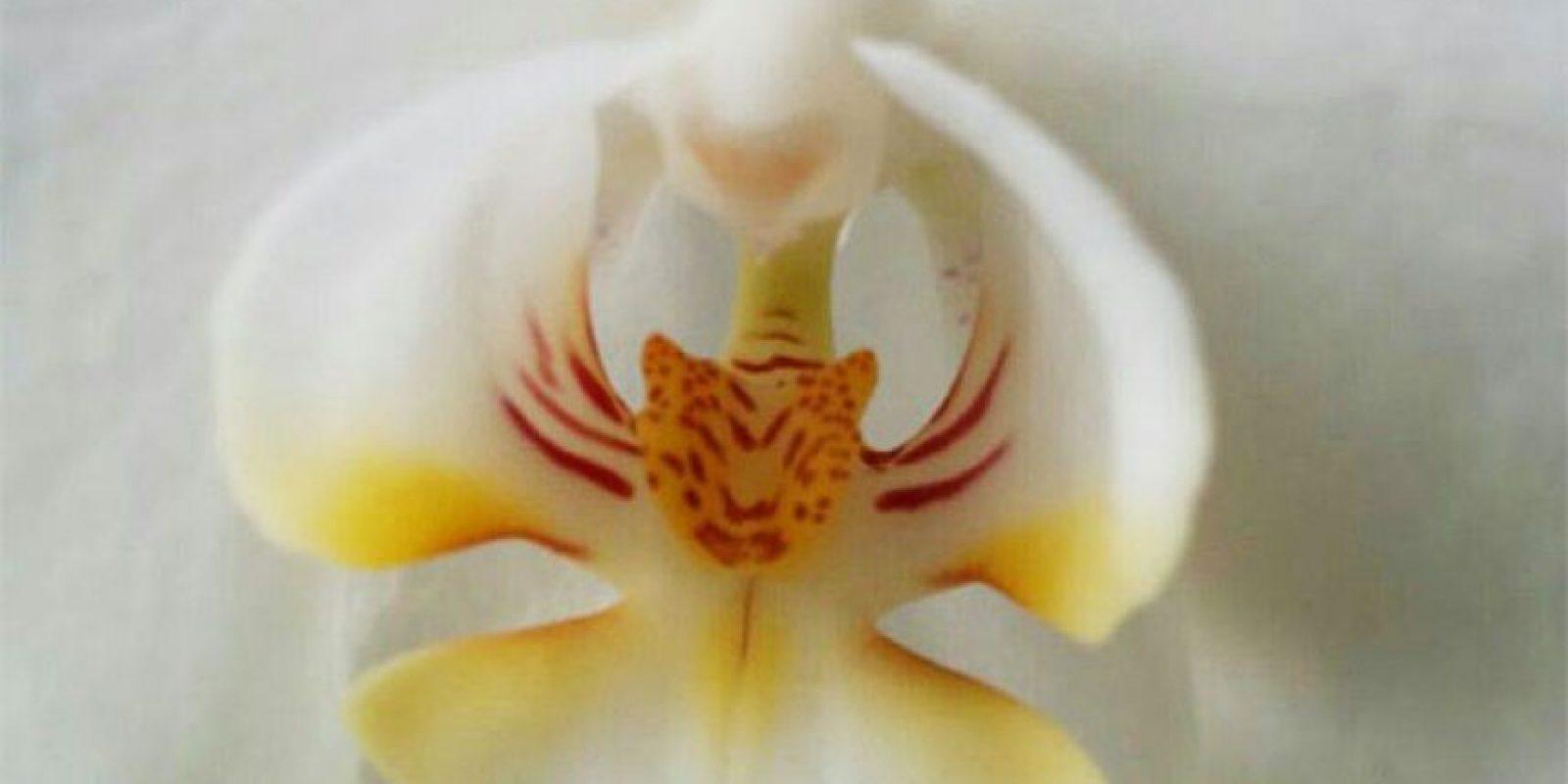 Foto:boredpanda.com