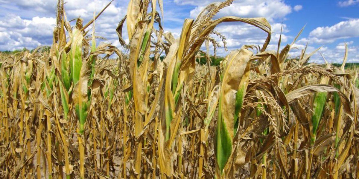 Gestionan Q1 mil millones más por nueva sequía