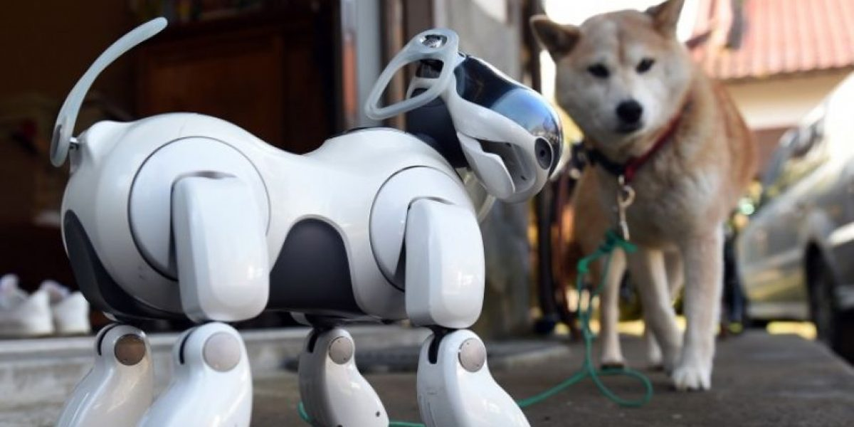 Perros robots Aibo, compañeros en la vida y en la muerte