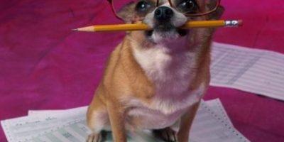 Foto:Tumblr.com/Tagged-perros-sorprendentes