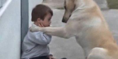 El respeto de un perro a los niños Foto:Vía Youtube