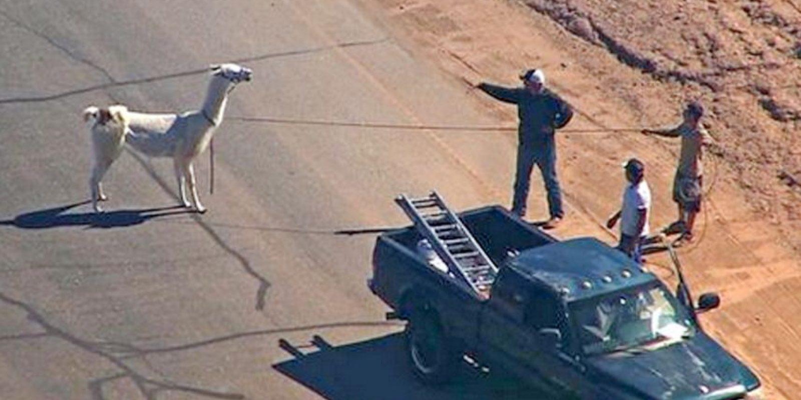 La persecución tuvo una duración de aproximadamente 10 minutos Foto:AP