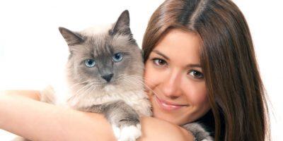 Consejos. ¿Quieres adoptar a un gato?