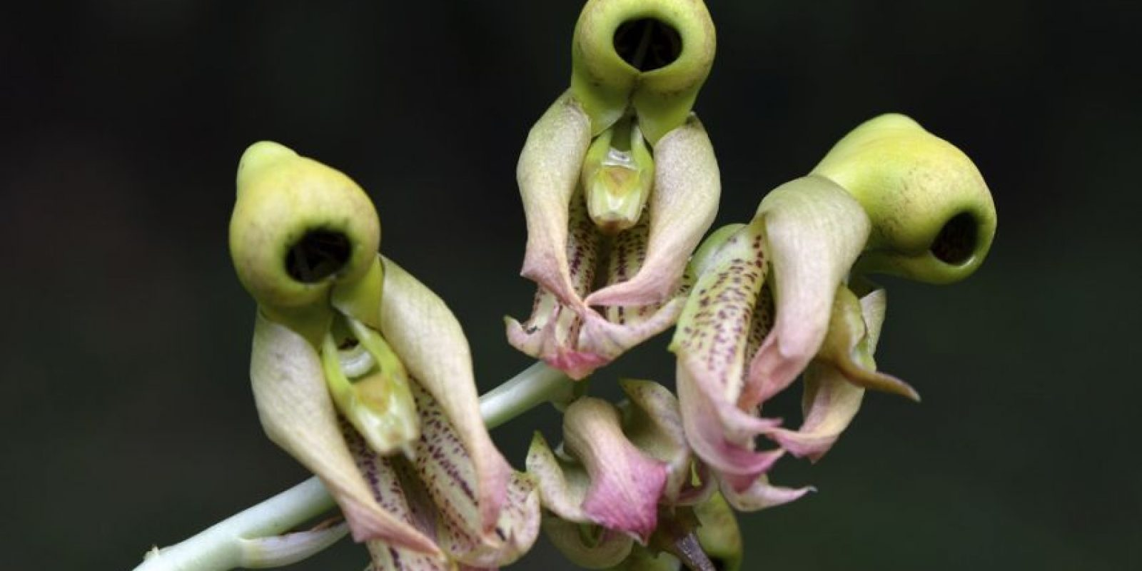 Lo peor de todo es la flora exótica de Guatemala. Foto:http://www.buzzfeed.com