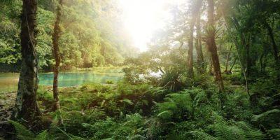 ¿Quién va a querer explorar un bosque así de terrible? Foto:http://www.buzzfeed.com
